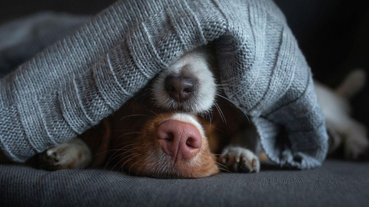 Candog Hundeseminare