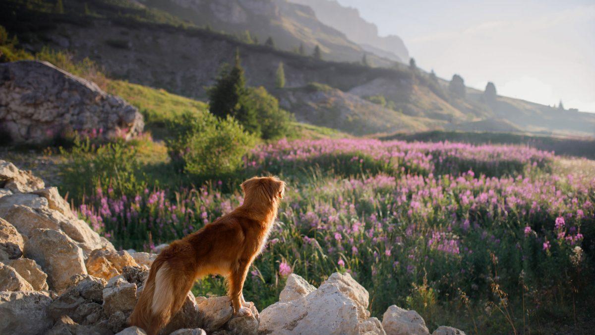 Reisen & Hundewandern
