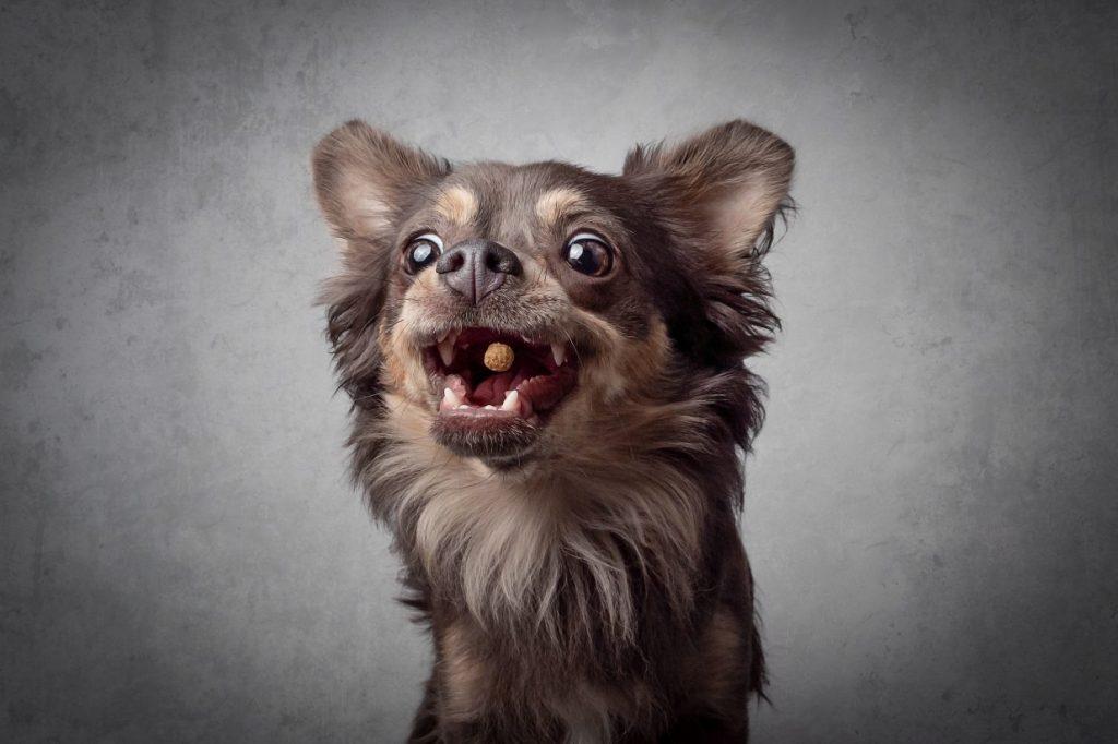CANDOG Hundetrainer